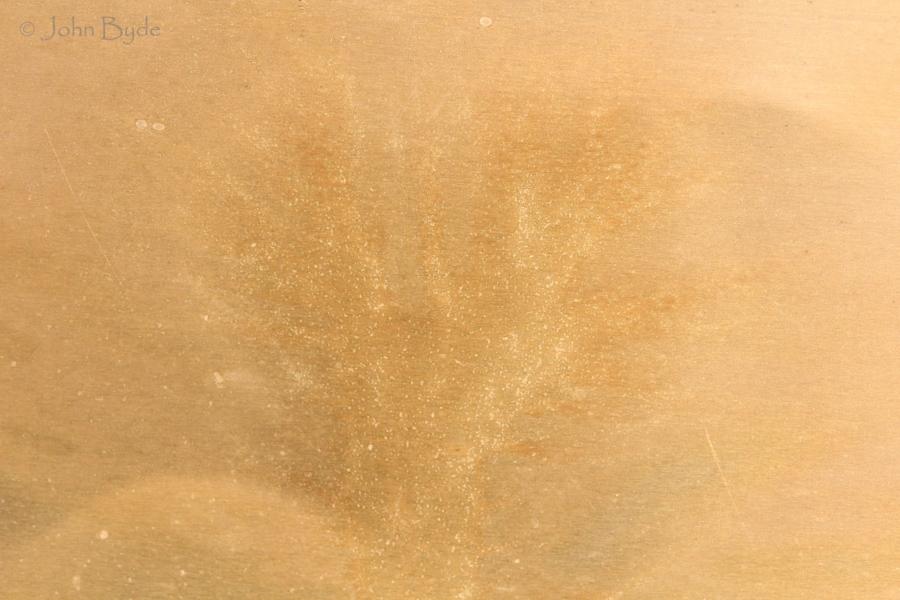 10. Fern Phoenix
